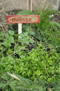 Melisse