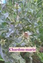 chardonmarie.jpeg