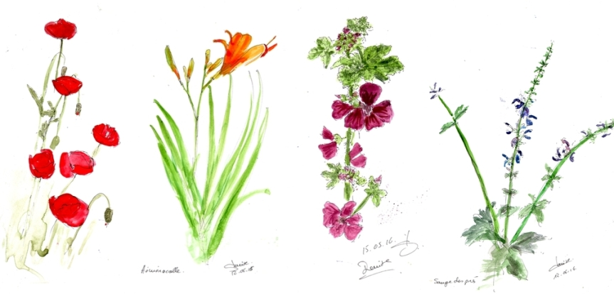 Qui suis-je ? reconnaître les plantes dujardin