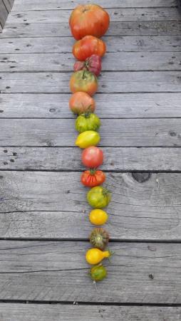 tresse-de-tomates