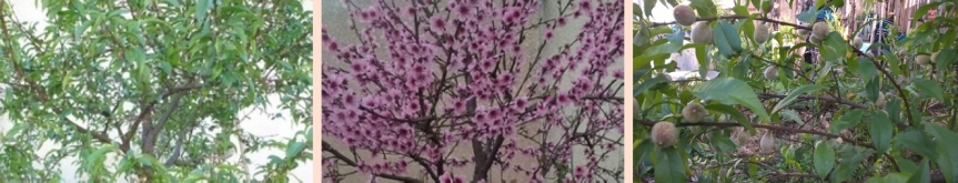 Zoom sur les fleurs et lescouleurs