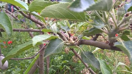 Soigner ses arbresfruitiers
