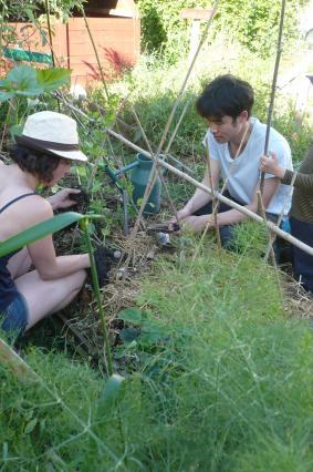 plantation des concombres et cornichons