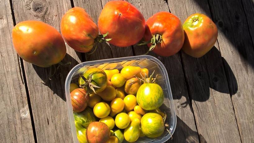Des pêches, des tomates et descucurbitacées