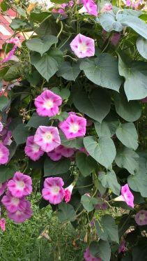 Des bouquets de toutes couleurs
