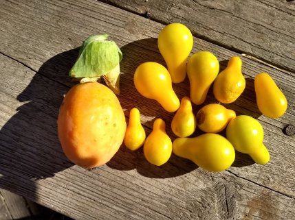 fruit de la passion et tomates poire jaune